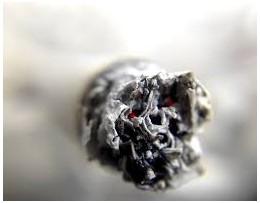 Rozdiely medzi efektom fajčenia marihuany na mozog (S nikotínom a bez)