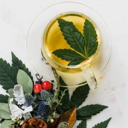 Vše o konopném CBD Čaji z marihuany (+ Speciální Recept a Účinky)
