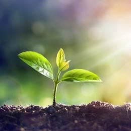 Jaké další rostliny produkují kanabinoidy?
