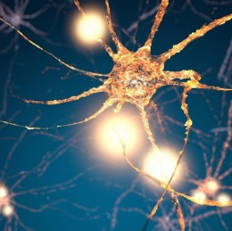 Konopí a mozkové buňky – Studie