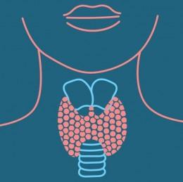 Potenciál CBD při léčbě poruch štítné žlázy