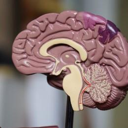 Aký veľký vplyv má CBD na mozog a pamäť?