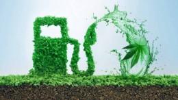 Je konope najlepšou surovinou pre biopalivá?