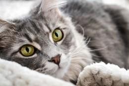 CBD a epilepsie koček