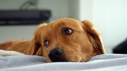 CBD při problémech s kůží a srstí psa