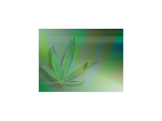 Cannabis kvíz