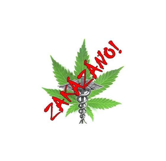 Lékařská marihuana - co a jak léčí