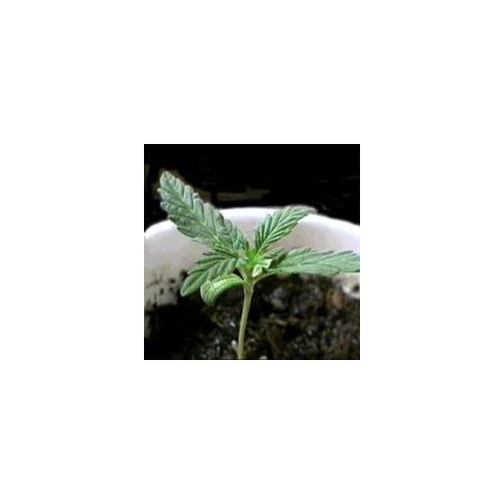 6 rad na 99% problémů pěstování