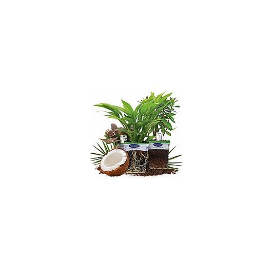 Výhody pěstování v kokosu