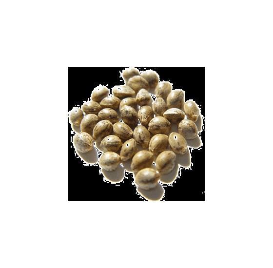 Konopné semínko má mnoho podob