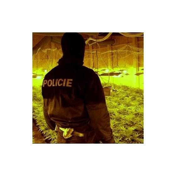 Najväčšie pestiarne marihuany