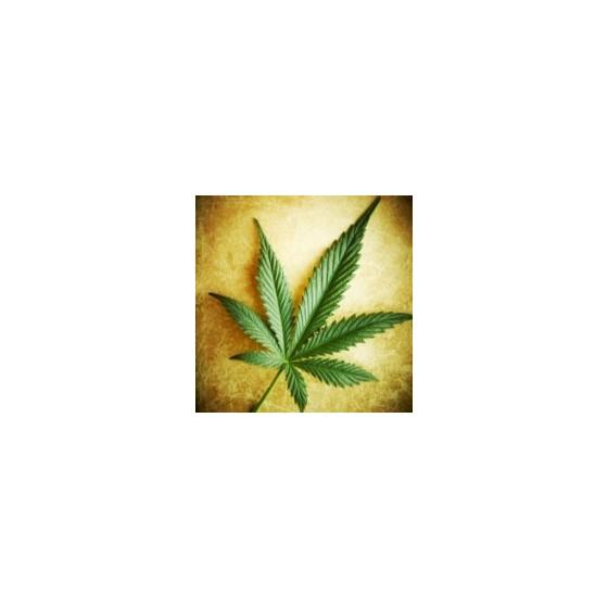 Tri najstaršie genetiky marihuany