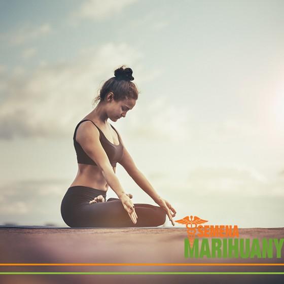 4 Nejlepší Odrůdy Konopí pro Meditaci