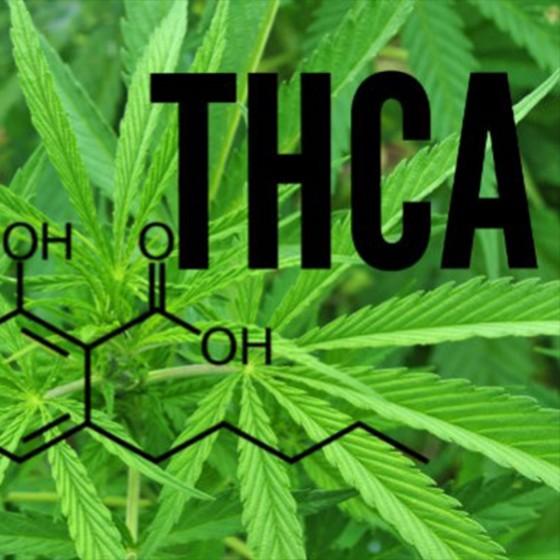 Liečebné kanabinoidy 3: THCA