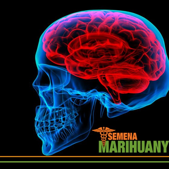 Liečebné Konope a liečba Mozgových nádorov