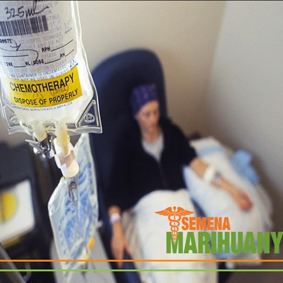 Léčebné konopí a chemoterapie