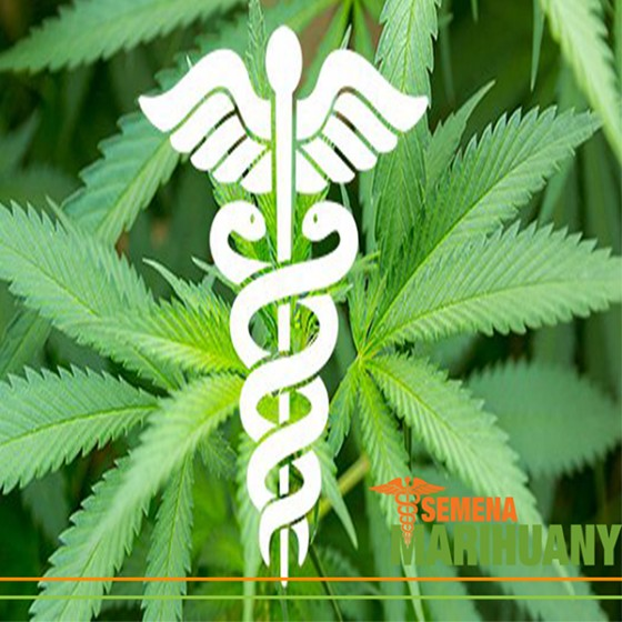 Léčebné Kanabinoidy 5: CBDV