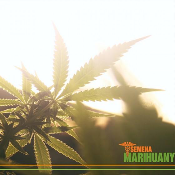 "6 tipov, ako nefajčiť ""marihuanu"""