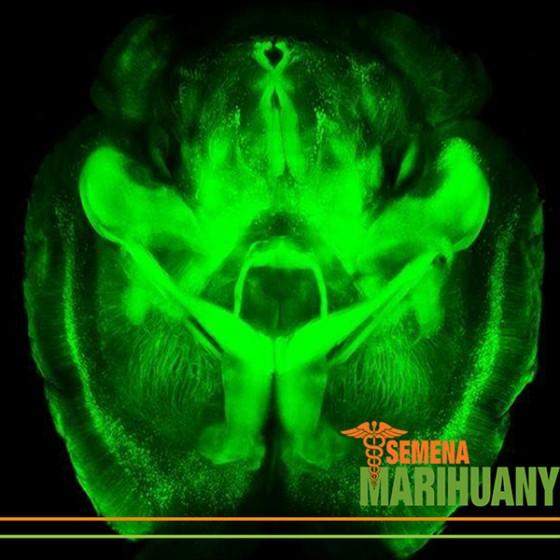 Léčba Neurodegenerativních Poruch pomocí Konopí