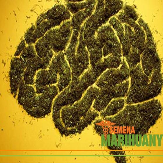 Vliv léčebného konopí na mentální zdraví