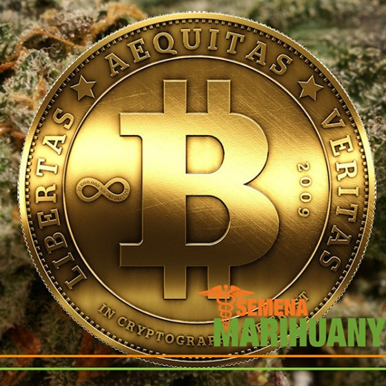Konopí, Bitcoin a Budoucnost