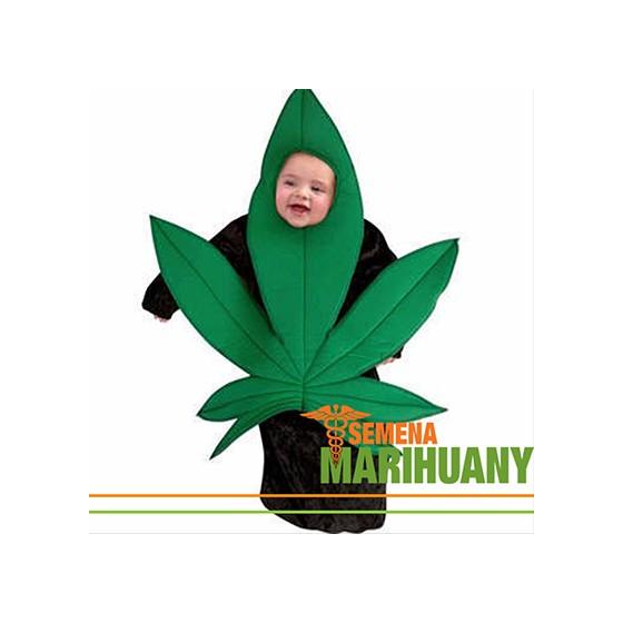 Díky legalizaci se děti učí o konopí