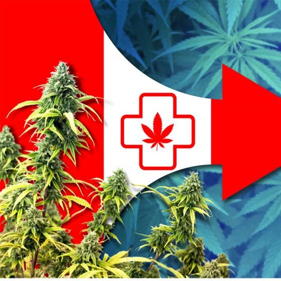 Za levnějším konopím do lékárny - simulují Kanaďané u doktora?