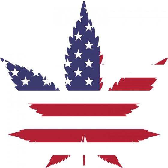 American Dream - Najvýnosnejšia odroda marihuany?