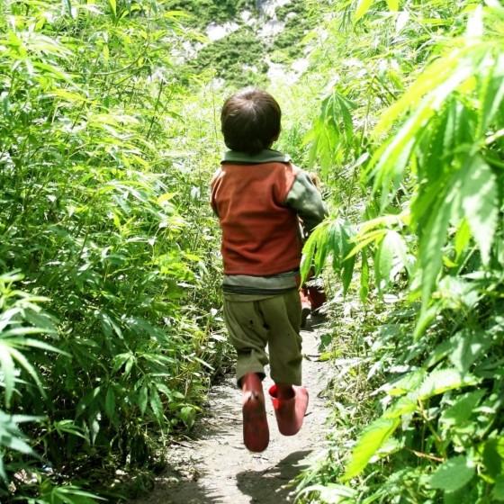 Průzkum použití kanabidiolu dotazovaných rodičů u mexických dětí s refrakterní epilepsií