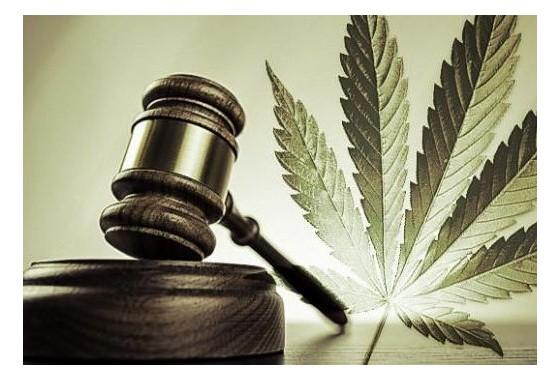 Průřezový průzkum uživatelů lékařské marihuany - modely používání a vnímaná účinnost