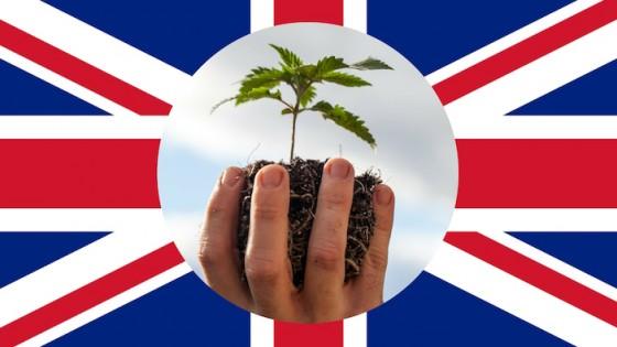 Léčba konopím ve Spojeném království - výsledky celostátního průzkumu