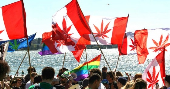 Hodnocení národních potřeb kanadských ošetřovatelů týkajících se konopí pro terapeutické účely