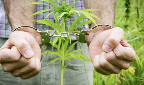 Rozdíl mezi ilegálním a lékařským používáním marihuany