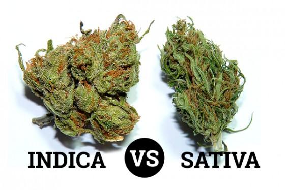 Kritika účinků Cannabis sativa a Cannabis indica - průzkum uživatelů lékařského konopí