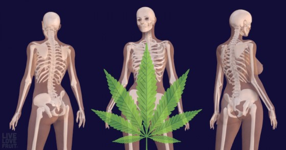 Těžká závislost na konopí může být špatná pro vaše kosti