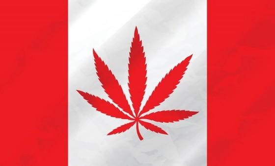 Legální marihuana přichází do Kanady. Investoři cítí příležitost.