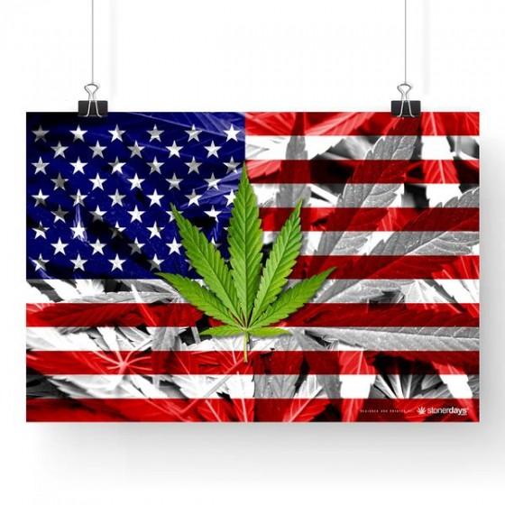 Studie: Legalizace marihuany na národní úrovni by mohla vydělat více než 132 miliard dolarů z daňových příjmů