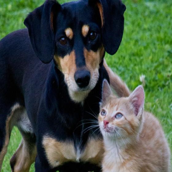 Léčebné konopí a CBD pro kočky a psi: Studie 2018