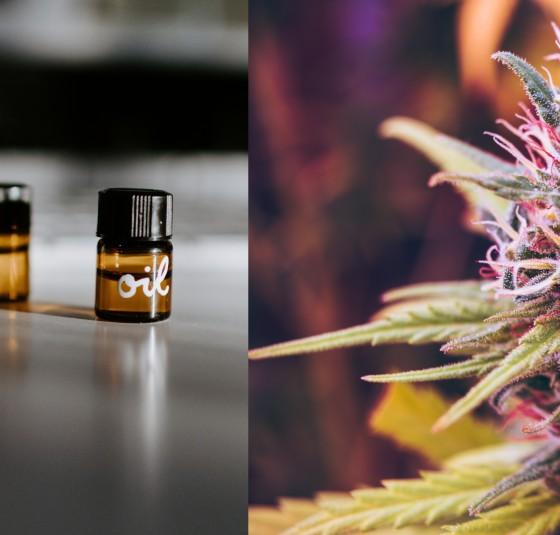 Liečba marihuanou: Výťažok z konope alebo samotnej kanabinoidy (THC & CBD)?